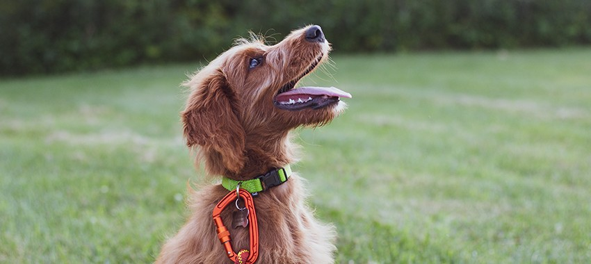 8 Paw-some Promotional Products for Dogs and Dog Lovers