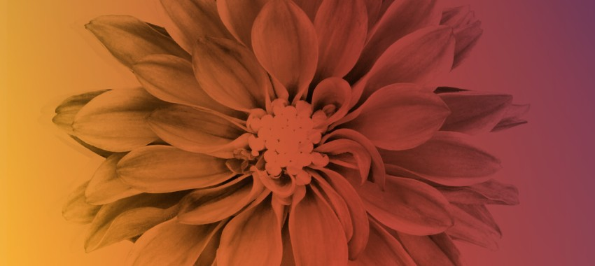 16 Ways Color Affects Your Branding and Marketing